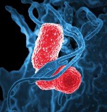 Pneumonia atinge mais idosos e crianças