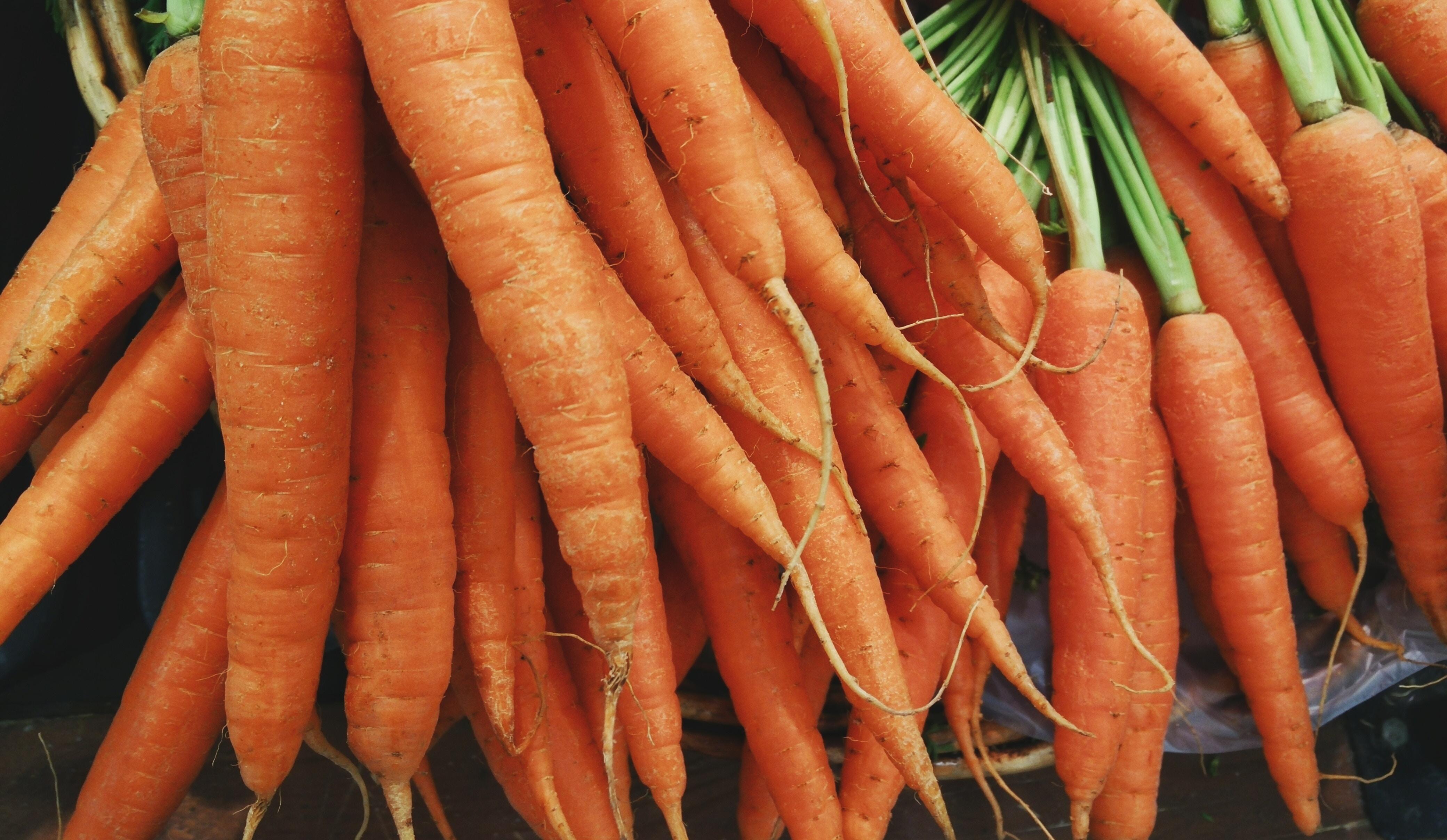 Cenoura rica em carotenóides